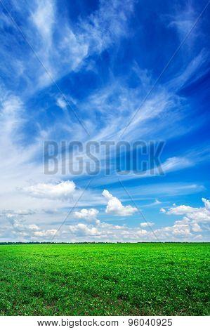 Wonderful Soy Plantation And Blue Sky.