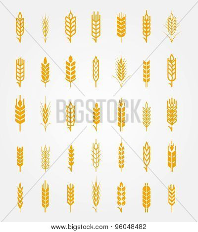 Vector wheat ears icons set