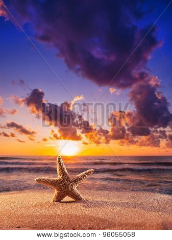 Starfish on the sandy beach  at sunset