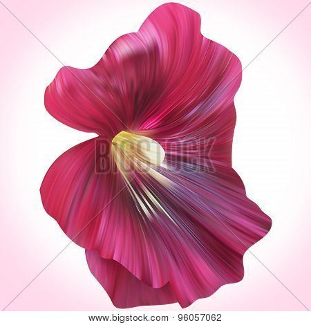 Purple Mallow illustration close-up on backdrop for design