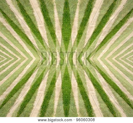 Abstract design with green grass