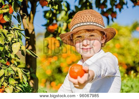Portrait of attractive cute young boy picking mandarins at citrus farm on sunny summer day