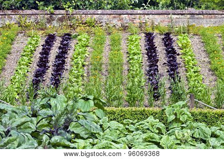 Vegetable garden with young plants on a slope