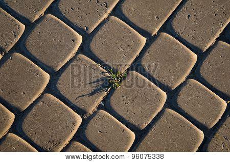Tuft Of Grass In Cobblestone