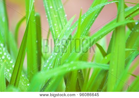 Green Grass - Natural Background