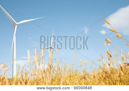 Windmill Grassland Field Hill Natural Scenic Concept