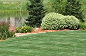 image of dogwood  - Backyard Landscaping with a Lawn and Pond - JPG