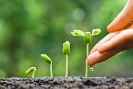 picture of germination  - hand nurturing and watering young baby plants growing in germination sequence on fertile soil with natural green background - JPG