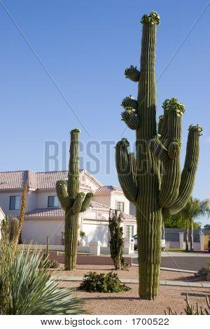 Arizona Front Yard
