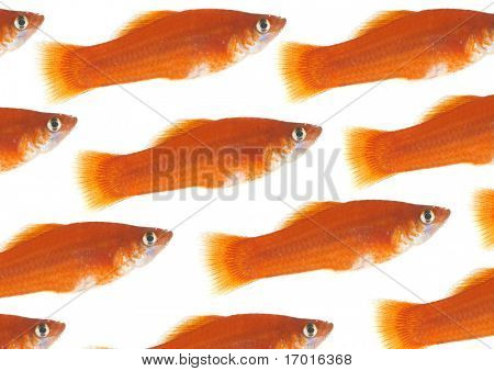 Flight of gold small fishes on a white background.