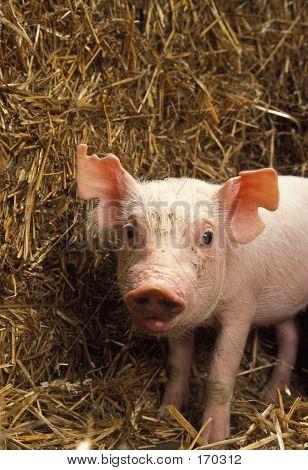 Piglet...cute!!