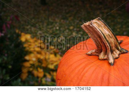 Pumpkin In The Yard
