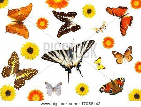 Постер, плакат: группы бабочек и цветов изолированные, холст на подрамнике