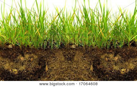 Green grass with earth crosscut