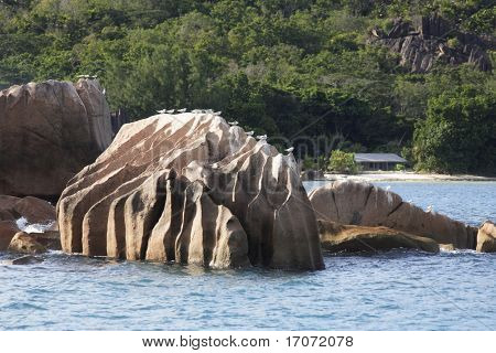 sea birds satnding in line on a rock of anse Lazio at Praslin one of the seychelles island