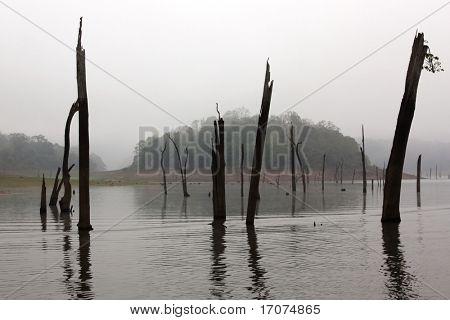 Reserva do Lago Periyar no estado de Kerala Índia
