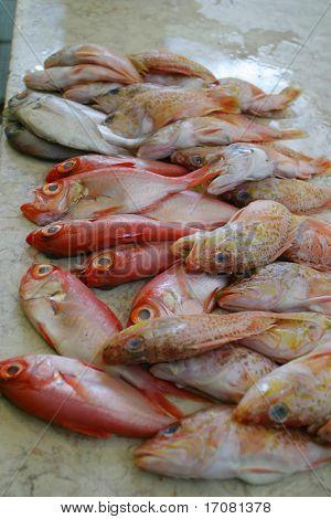 Pescado fresco en la losa de un pescadero