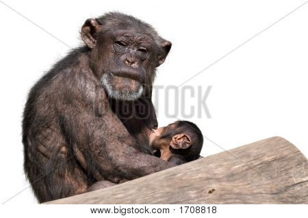 Monkey Mother & Baby