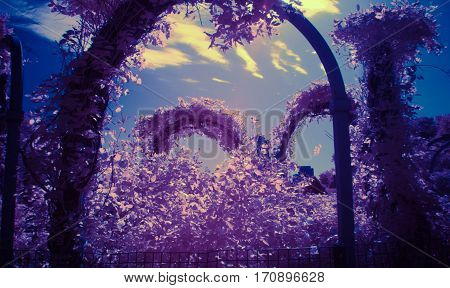 arbor of flowers infrared photography color swap