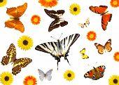 Постер, плакат: группы бабочек и цветов изолированные