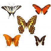 Постер, плакат: Коллекция бабочек