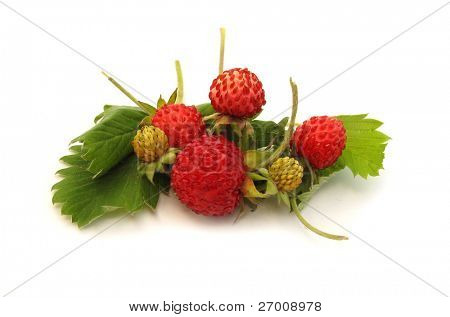 Wilde Erdbeeren rot mit grünen Blättern