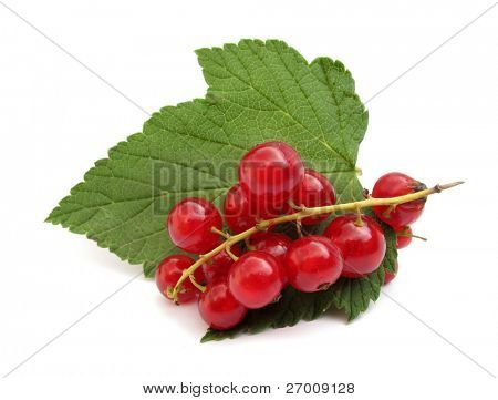 Currant red redcurrant