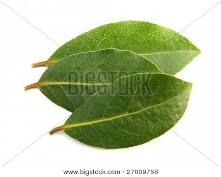 laurel bay aromatic leaves
