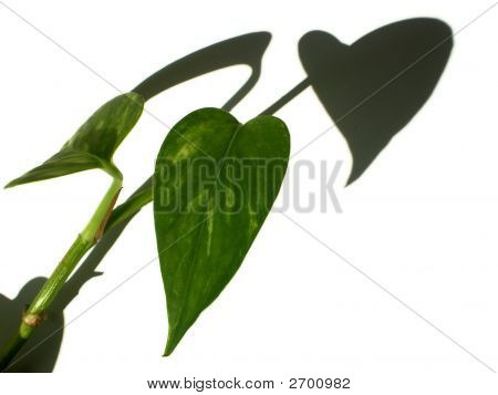 Heart Of Leaves