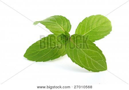 Mentha mint leaves