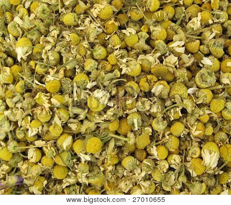 Chamomile dried for tea