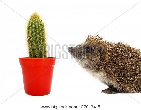 Cactus and hedgehog spiny pair