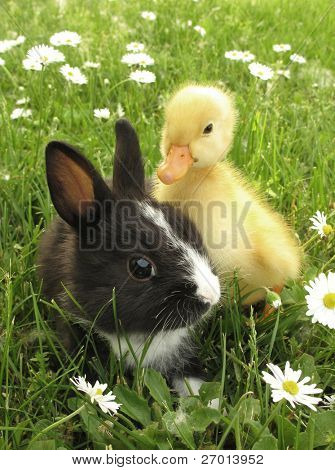 Rabbit bunny and duckling best friends