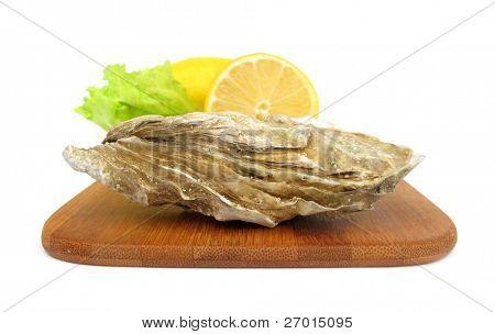Moluscos de cáscara comestibles ostra Crassostrea gigas
