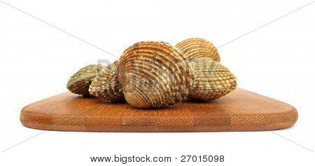Clams edible bivalve warty Venus verrucosa on wooden board