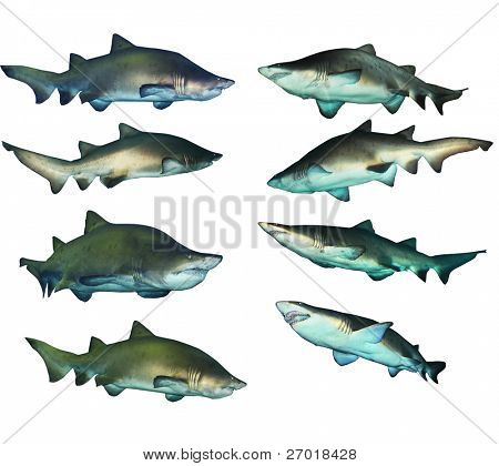 8 shark collection