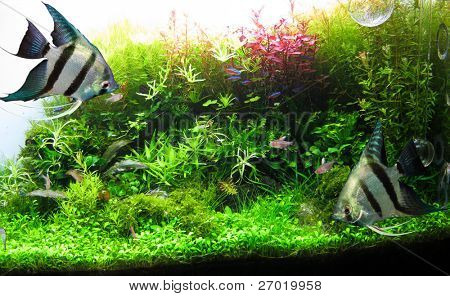 Beautiful aquarium