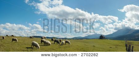 Sheep Herd On Plateau
