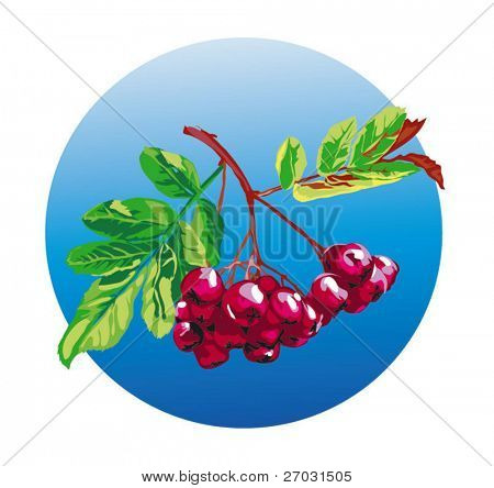 branch black ashberry