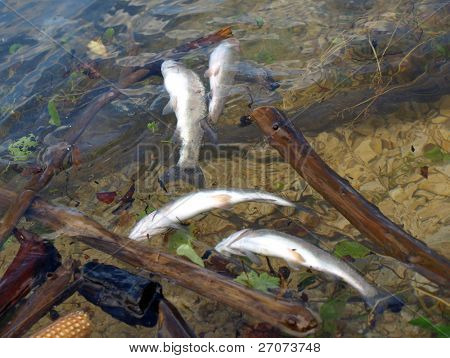 Concern for the Environment, Dead Fish, Pollution, Nature