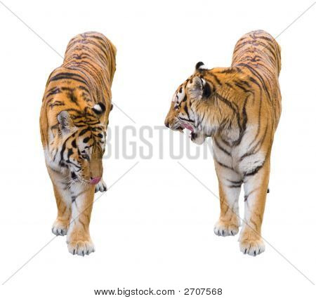 Two Tigers Cutout