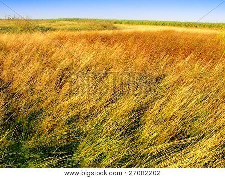 tundra landcape