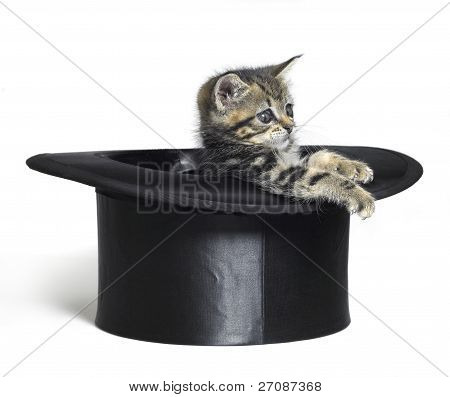 Cute Kitten Playing In A Black Top Hat