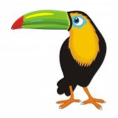 Toucan cartoon vector illustration