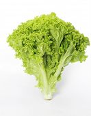 picture of green leaves  - Lettuce on a white background - JPG
