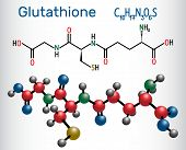 Glutathione (gsh) Molecule, Is An Important Antioxidant In Plants, Animals And Some Bacteria. Struct poster