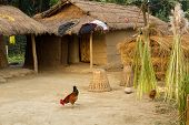 nepalese traditional farm in chitwan, nepal