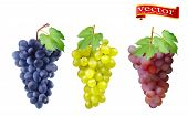Red, Pink Muscatel And White Table Grapes, Wine Grapes. Fresh Fruit, 3d Vector Icon Set. Cluster Of  poster