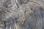 Close Up Of Weathered Grey Driftwood Log Showing Abstract Pattern Of Wood Grain For Backgrounds. Dri poster