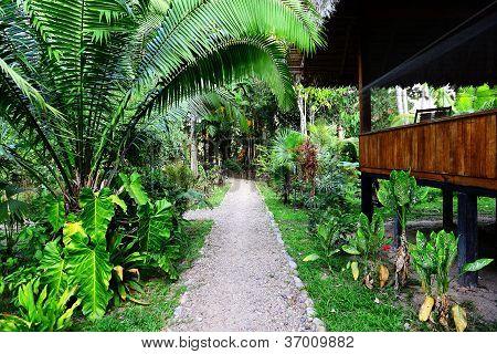 Lodge In Jungles